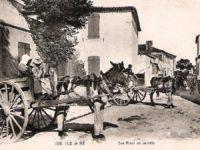 anes en culottes Ile de Ré, Hotel La Marée
