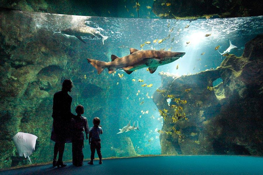 Hotel de La Maree, Hotel de charme 3 etoiles sur l'Ile de Ré - Que faire à voir à La Rochelle - Aquarium de La Rochelle