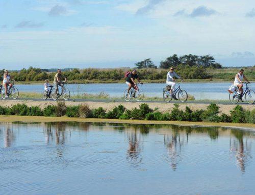 Hotel ile de Ré – Balade en vélo sur l'ile de Ré